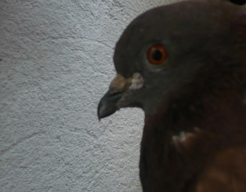 Balsa meets a Pigeon Angel - Page 2 Balsao10