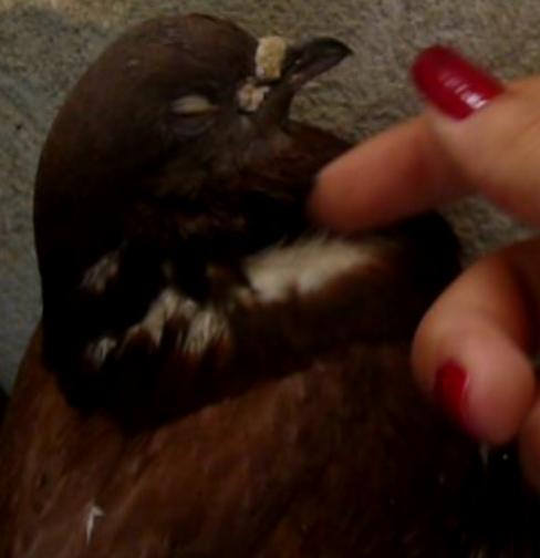 Balsa meets a Pigeon Angel - Page 2 Miminh10