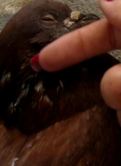 Balsa meets a Pigeon Angel - Page 2 Miminh11