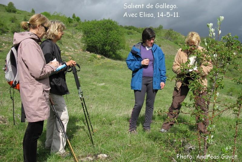 Orchis pallens dans les Pyrénées.  Img_0040