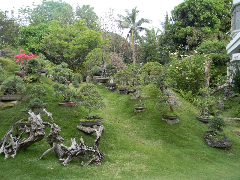 Ka Mario's Hidden Garden Dscn1310