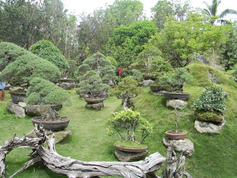 Ka Mario's Hidden Garden Dscn1312