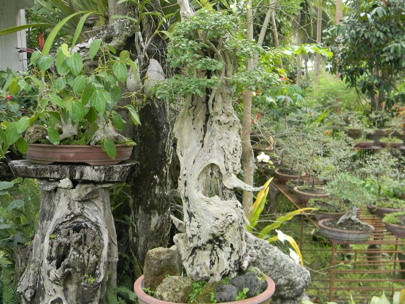 Ka Mario's Hidden Garden Dscn1316