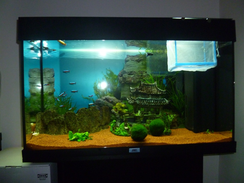mon aquarium 120 litres  P1000511