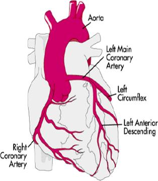 كيف تحمي قلبك من أخطار الكوليسترول؟ Untitl10