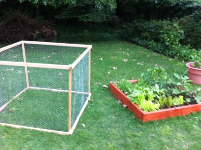 Squirrels, Wire cages, and Trellis on one end--what to do?! Garden11