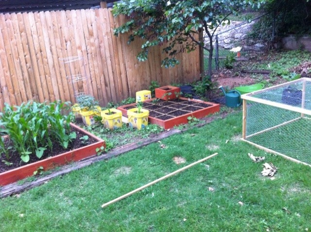 Squirrels, Wire cages, and Trellis on one end--what to do?! Garden12