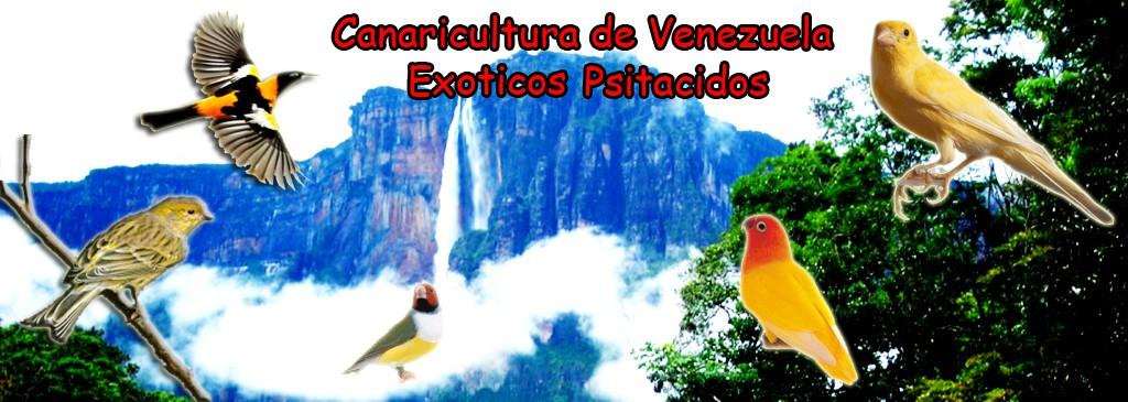 Canaricultura de Venezuela