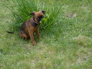 Ma sortie dans l'herbe(Kehops) P1040814
