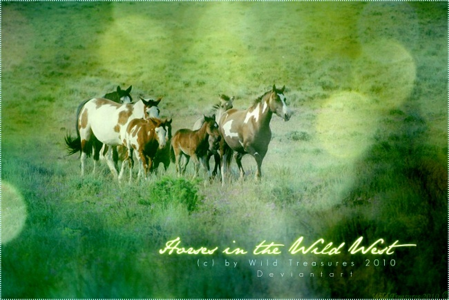 Horses in the Wild West