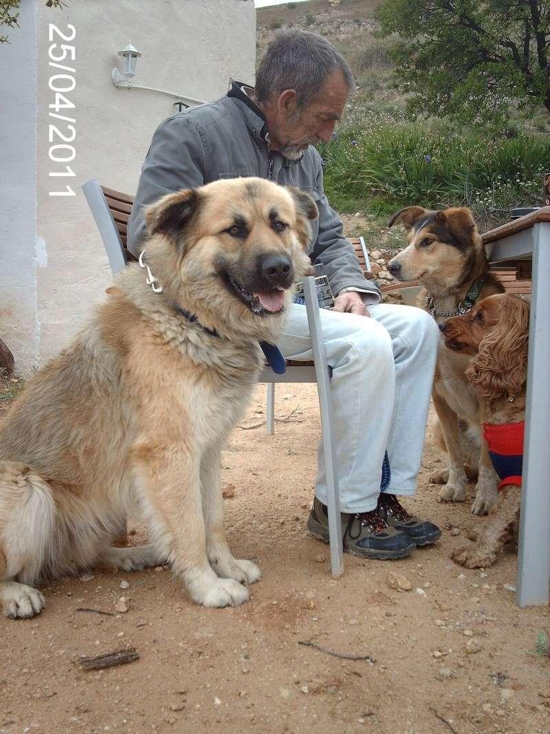 Leo, now homed :-) Leo_co14