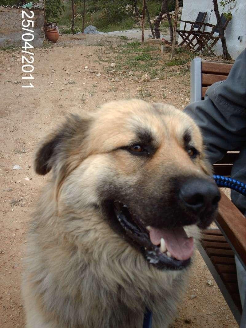Leo, now homed :-) Leo_co15