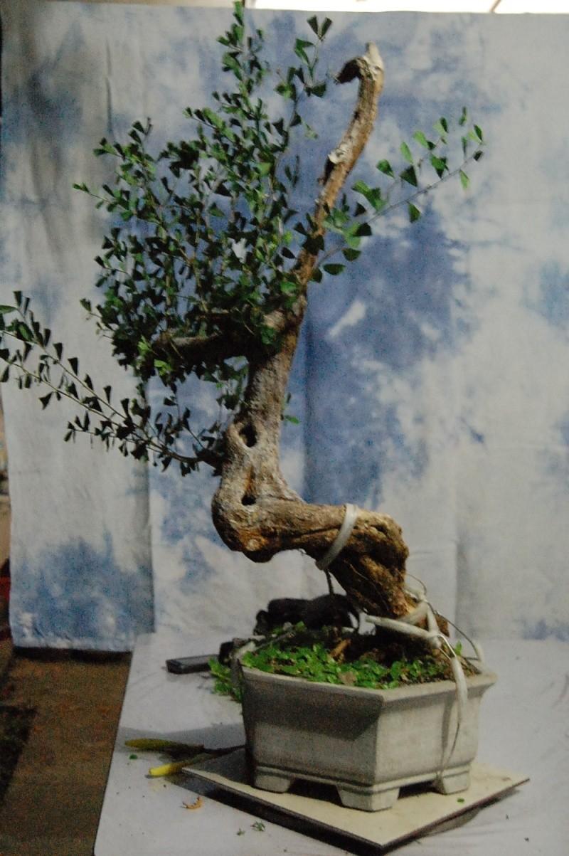 My Other Bluebell Bonsai Materials Wiring A Derick