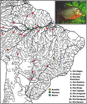 Pygocentrus nattereri Map_py11