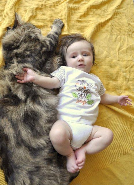 Gérer les animaux à l'arrivée de bébé 21552710