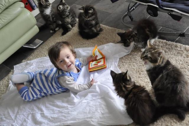 Gérer les animaux à l'arrivée de bébé 25495010