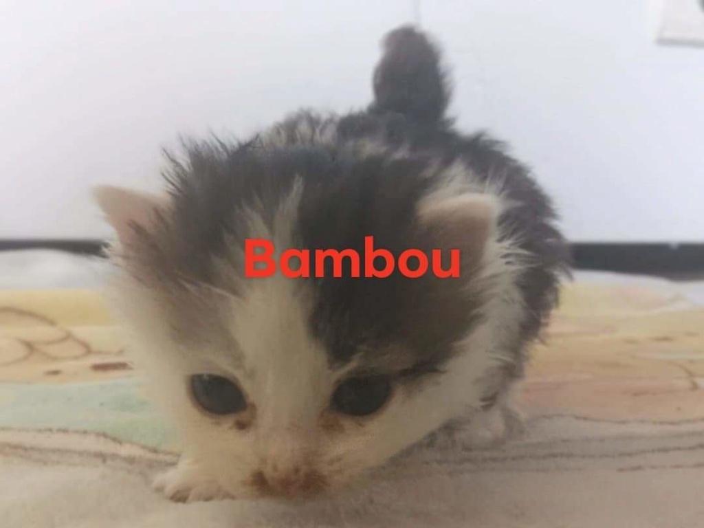 Bambou néle 01/09/2019 Chaton11