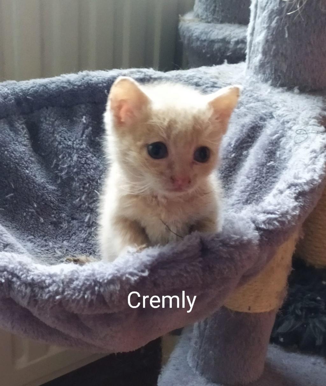 Cremly née le 01/09/2019 Chaton15