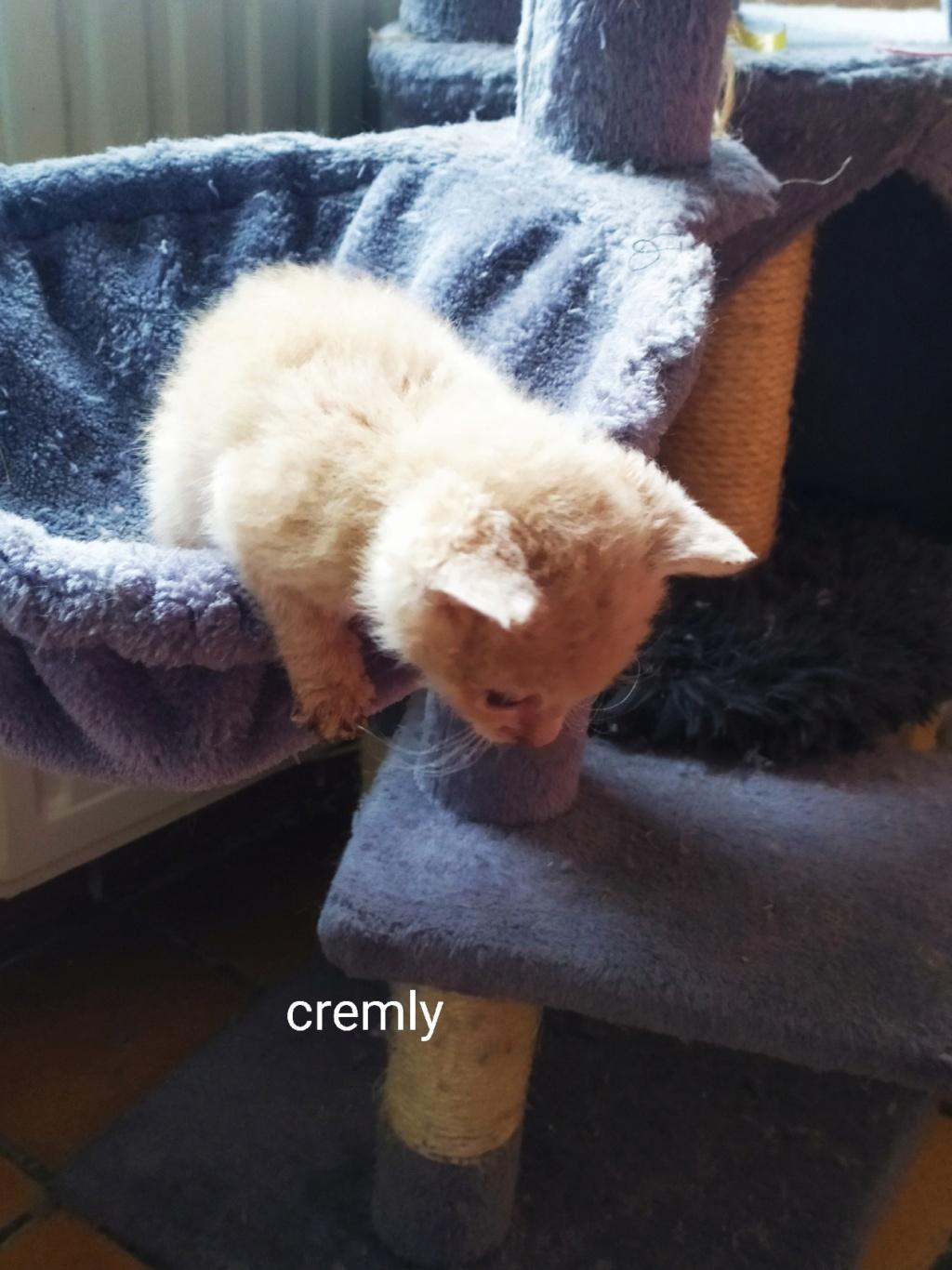 Cremly née le 01/09/2019 Chaton17