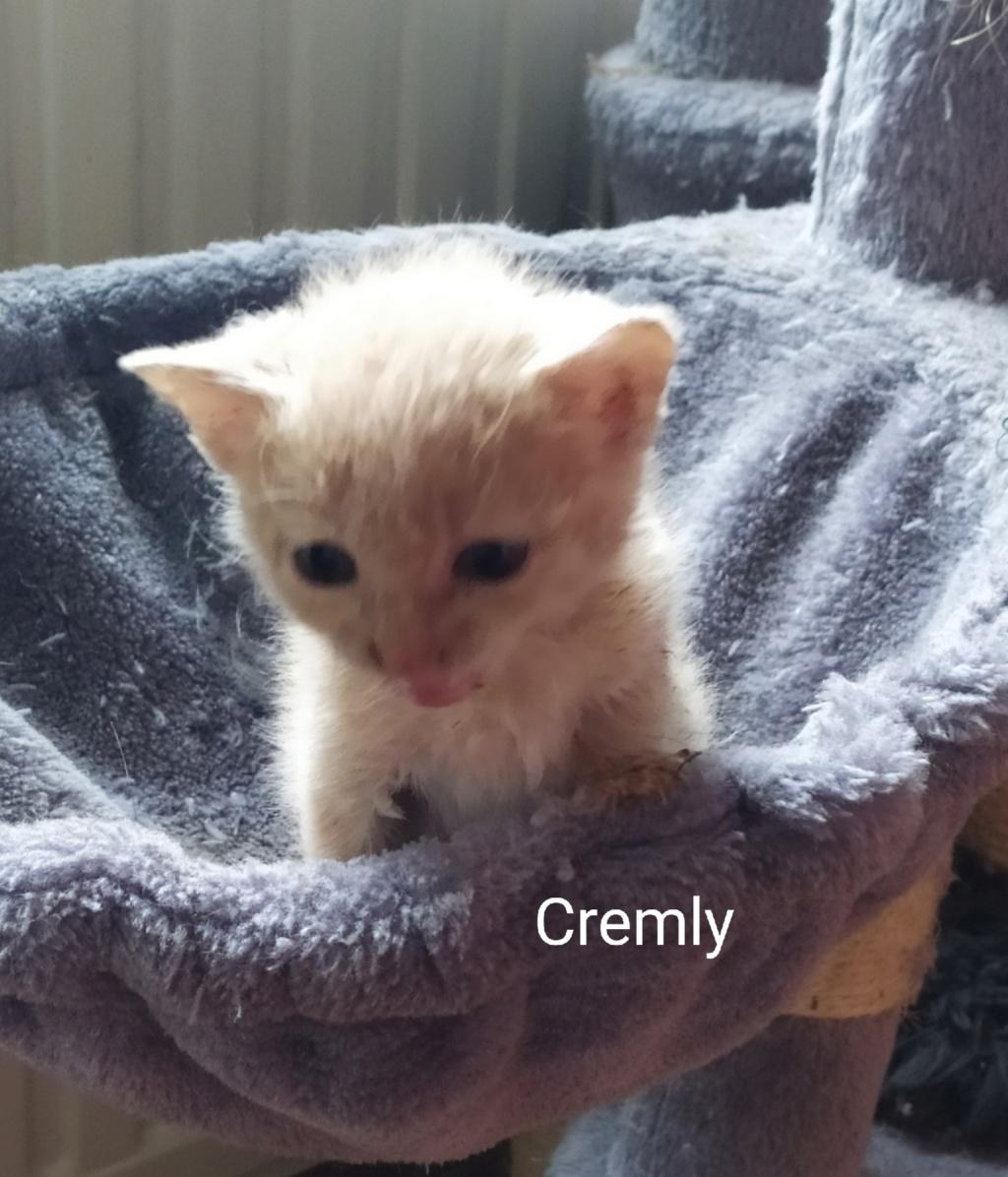Cremly née le 01/09/2019 Chaton19