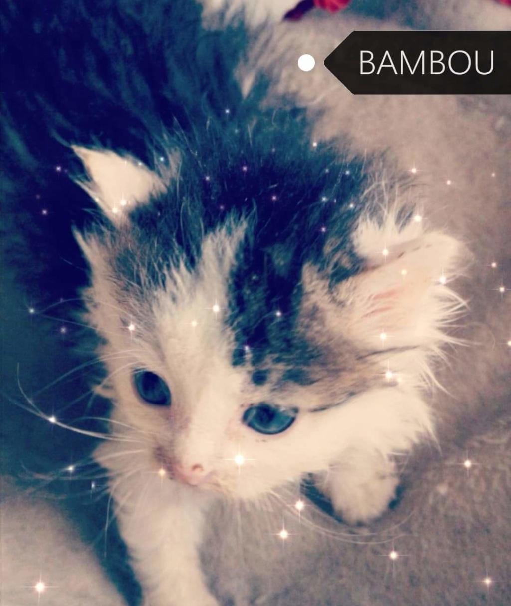 Bambou néle 01/09/2019 Chaton29