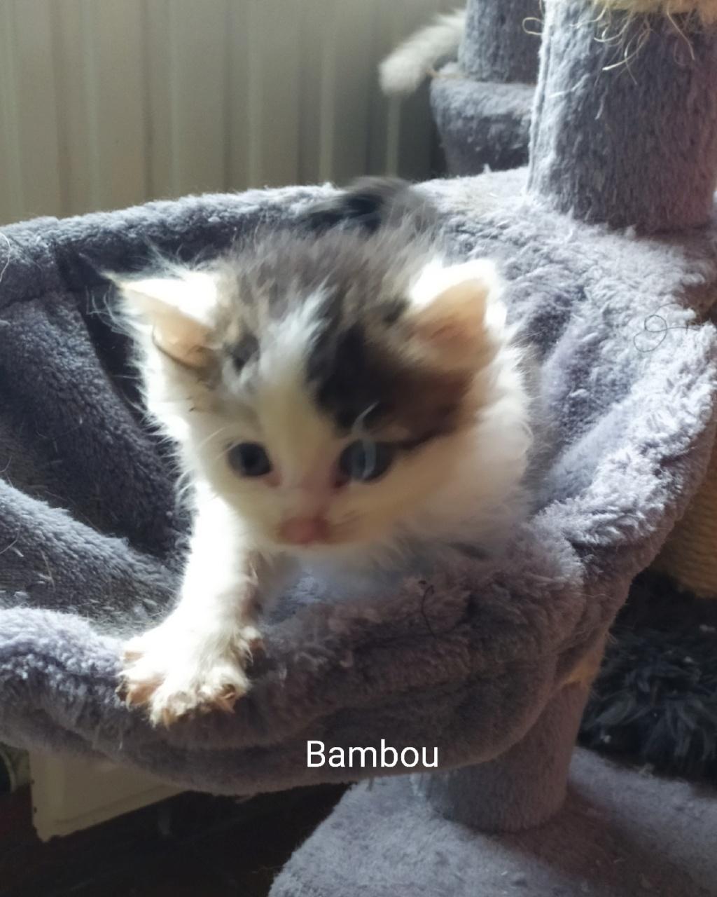 Bambou néle 01/09/2019 Chaton31