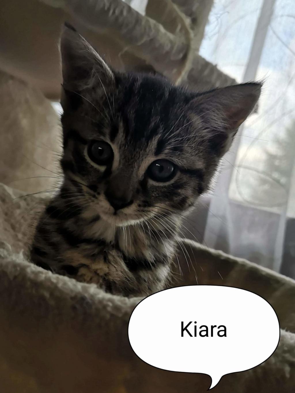 kiara née le 01/09/2019 Kiara_10