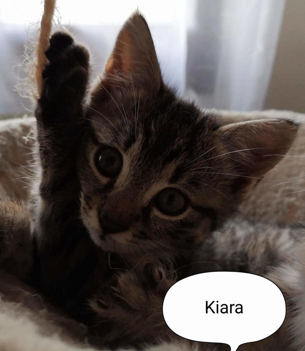 kiara née le 01/09/2019 Kiara_11