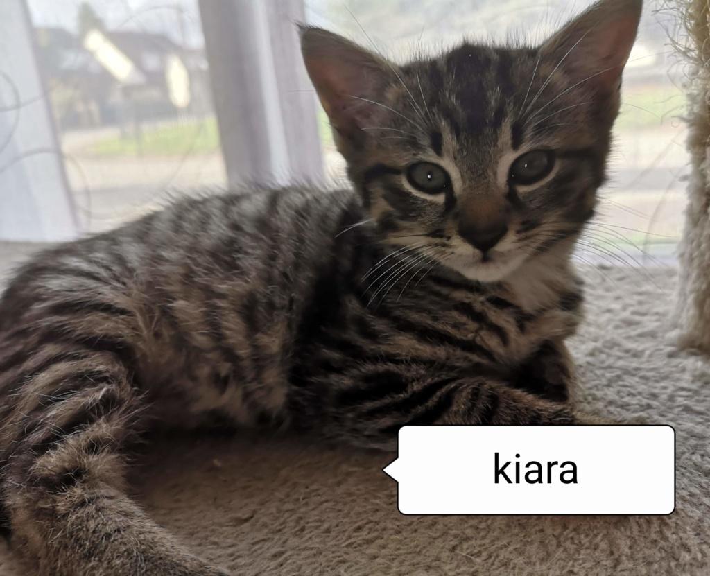 kiara née le 01/09/2019 Kiara_12