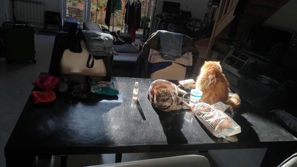 chuck en photos :) Chats_12