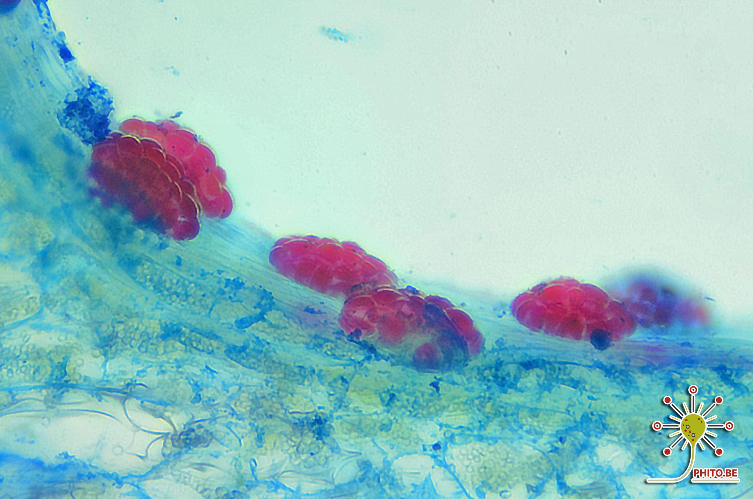 Quelques photos sous le microscope 2020-015