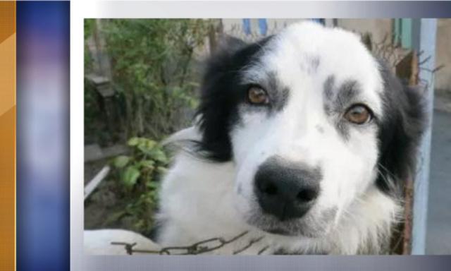 #Dordogne : le #chien qui avait été castré par la #SPA puis adopté a été rendu à son maître 524f1010