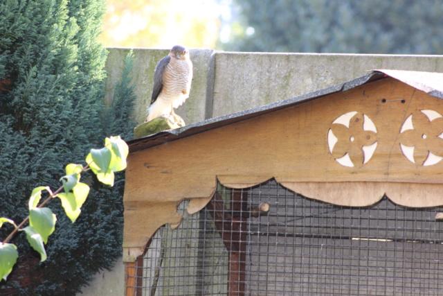 Les oiseaux du jardin - Page 2 Img_0315