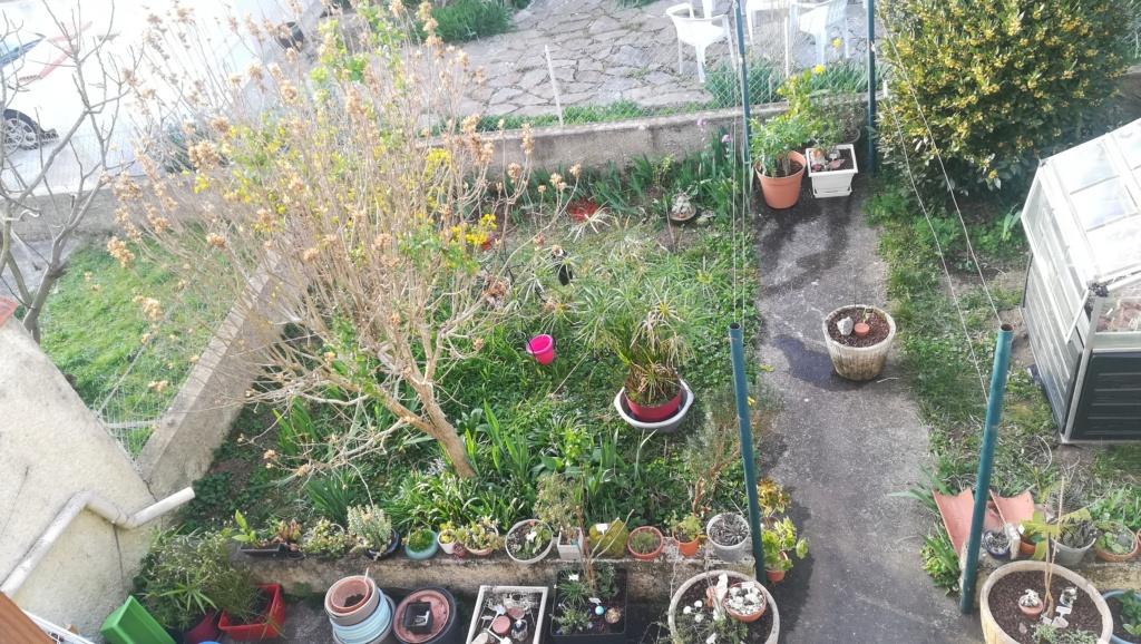 Le nouveau jardin de Digitaline  Img_1098
