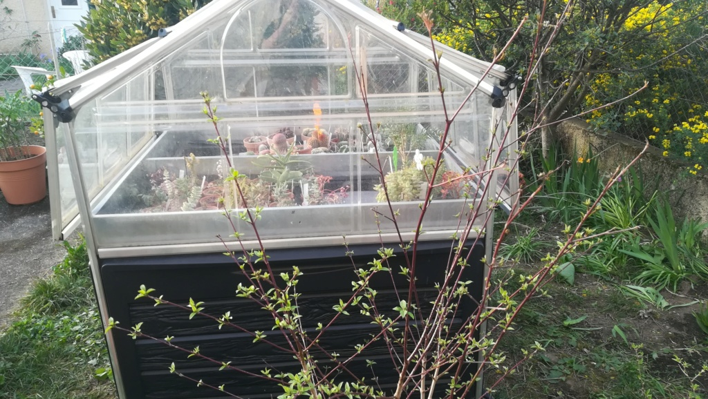 Le nouveau jardin de Digitaline  Img_1100