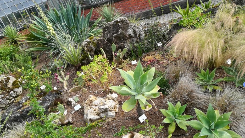 Les succulentes du jardin botanique de Nantes  Img_2670