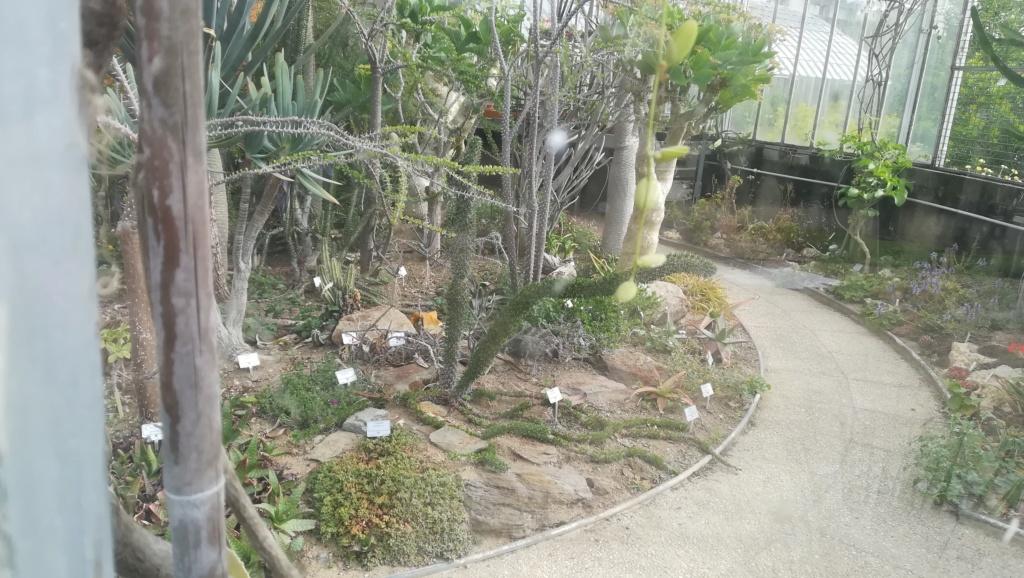Les succulentes du jardin botanique de Nantes  Img_2671