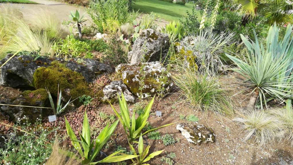Les succulentes du jardin botanique de Nantes  Img_2673