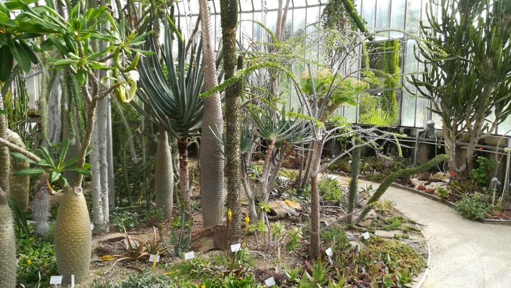 Les succulentes du jardin botanique de Nantes  Img_2674