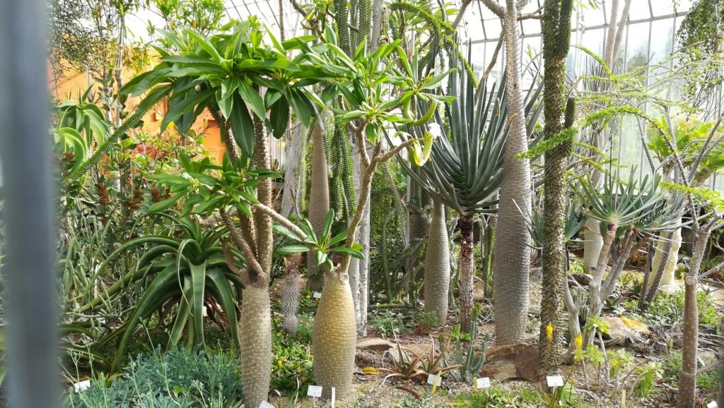 Les succulentes du jardin botanique de Nantes  Img_2676
