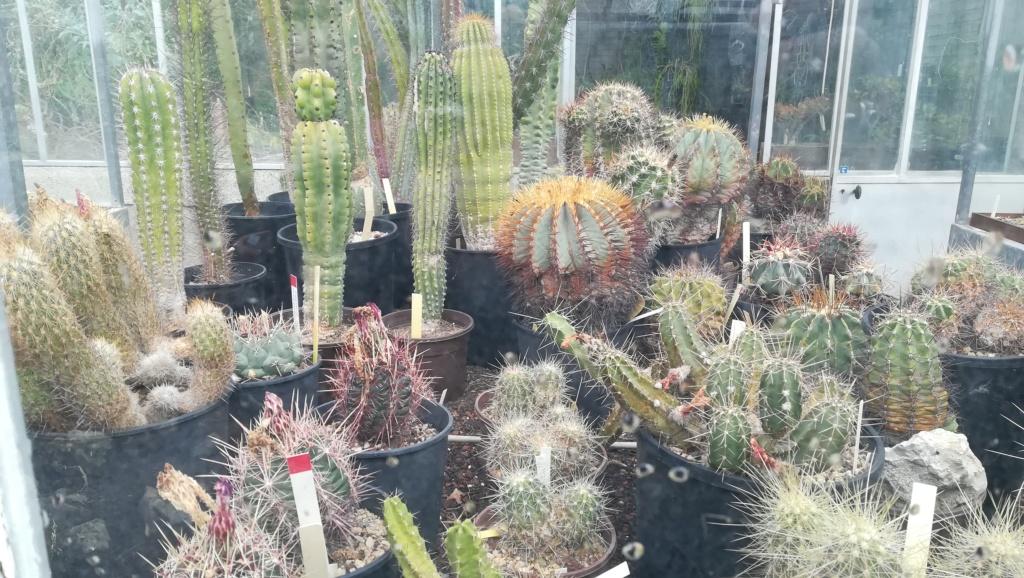 Les succulentes du jardin botanique de Nantes  Img_2681