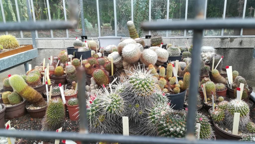Les succulentes du jardin botanique de Nantes  Img_2683