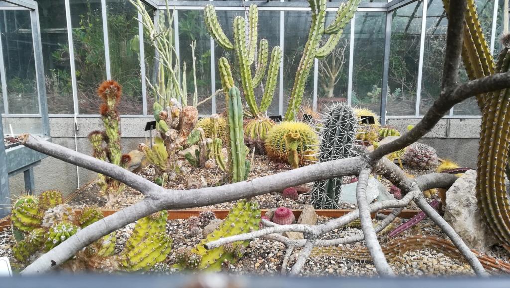 Les succulentes du jardin botanique de Nantes  Img_2685