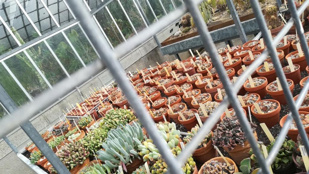 Les succulentes du jardin botanique de Nantes  Img_2686
