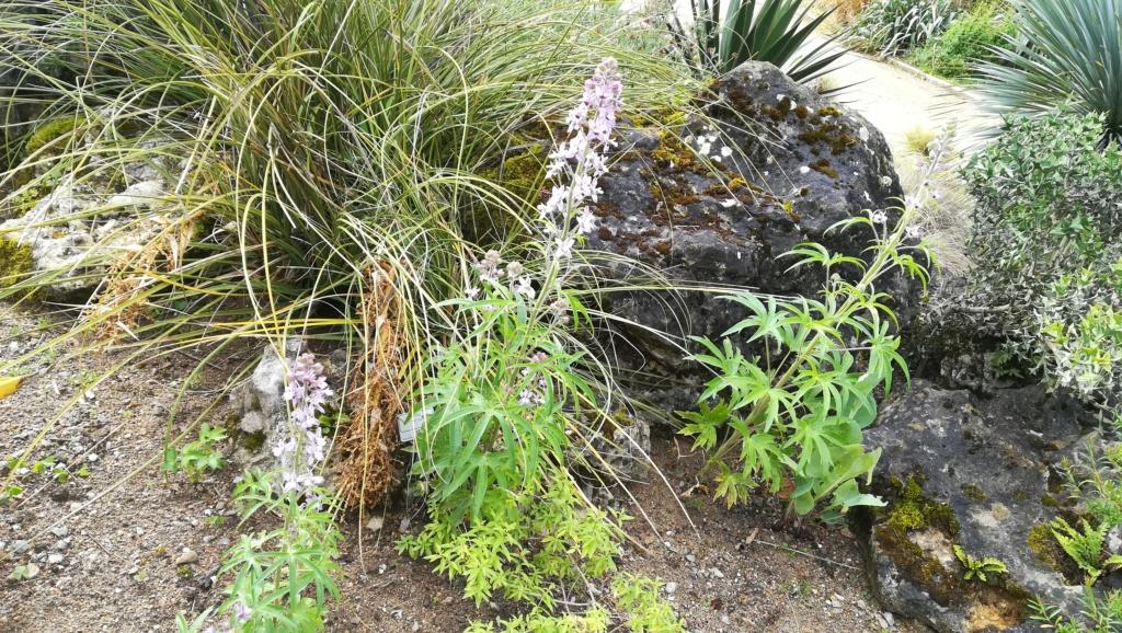 Les succulentes du jardin botanique de Nantes  Img_2688