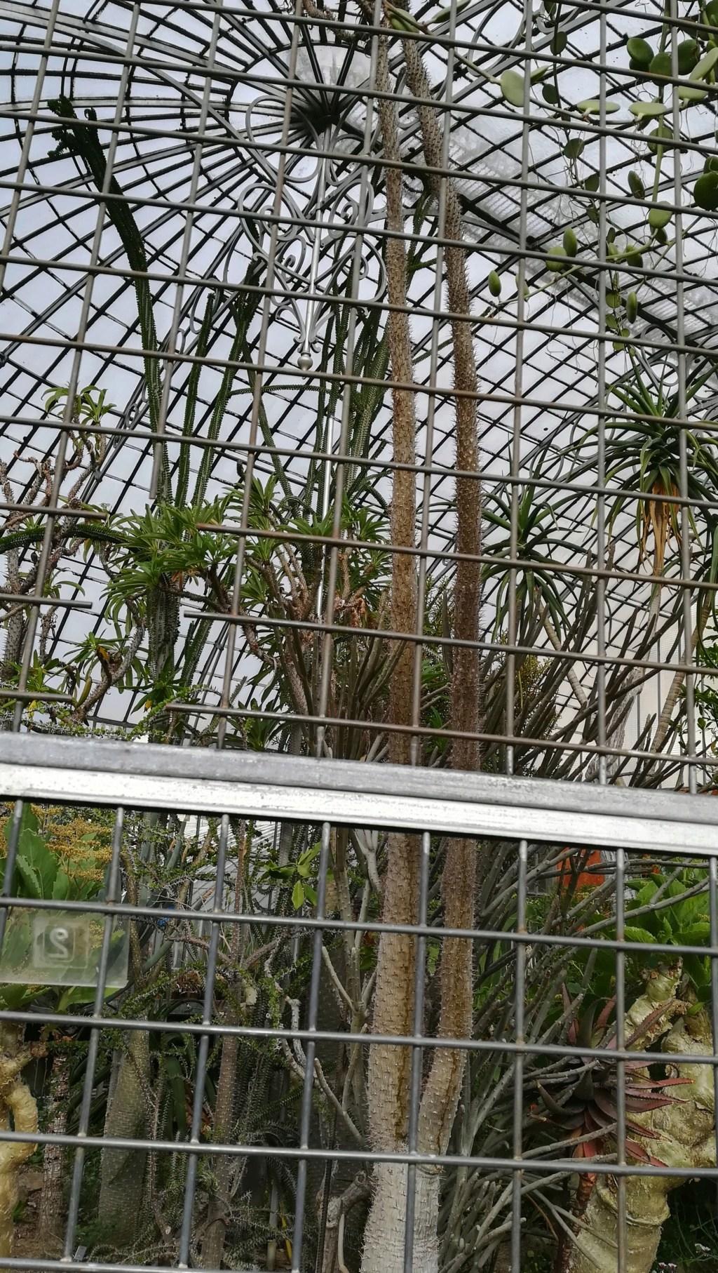 Les succulentes du jardin botanique de Nantes  Img_2689