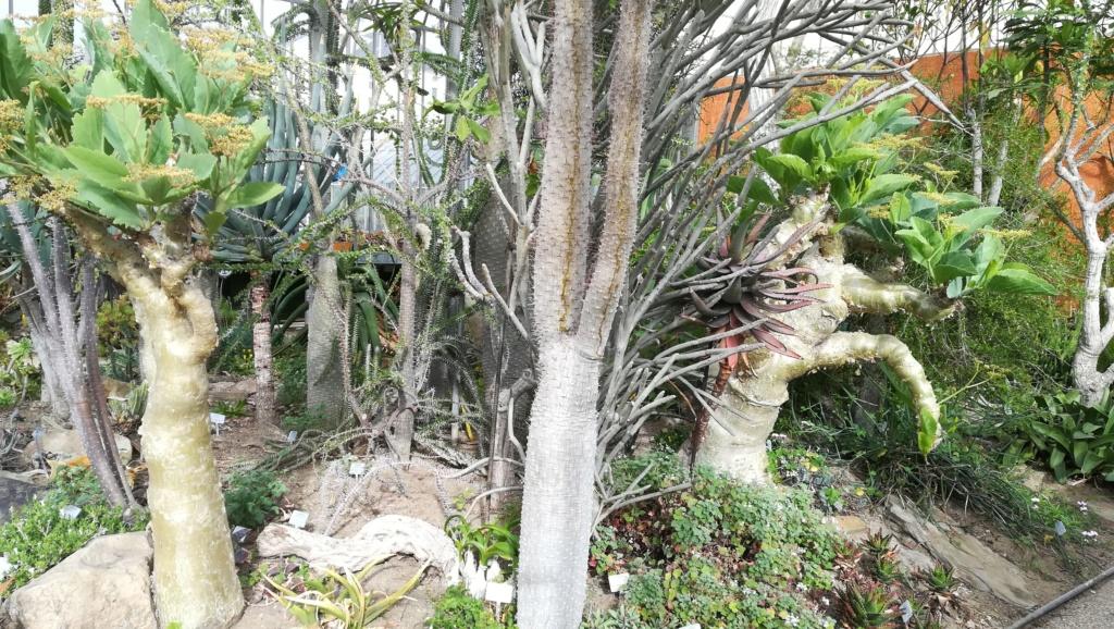 Les succulentes du jardin botanique de Nantes  Img_2690