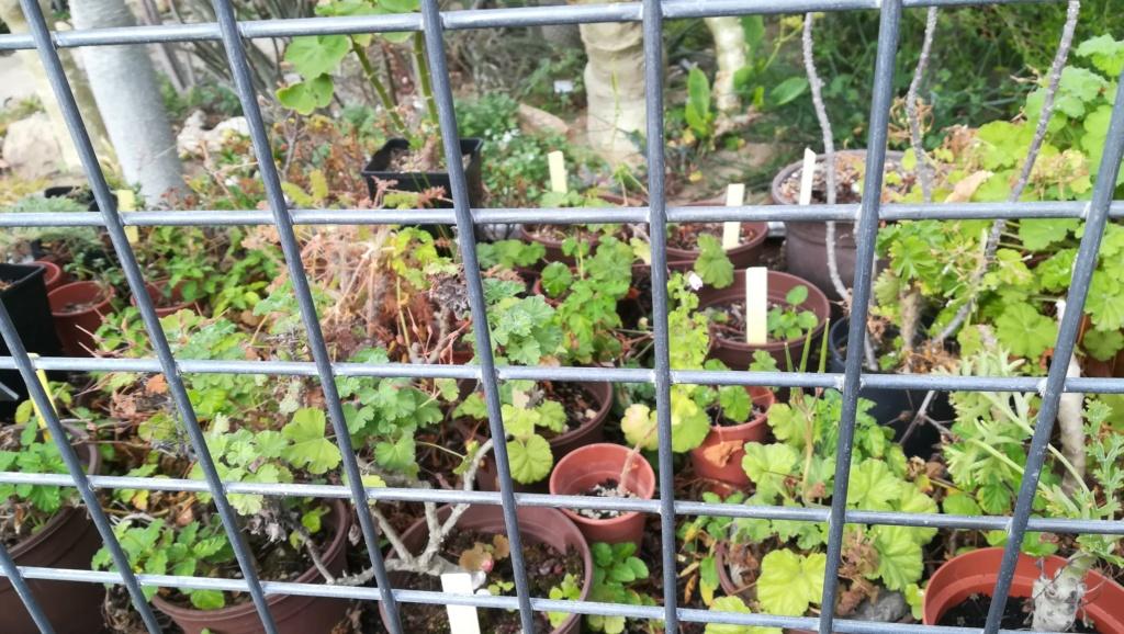 Les succulentes du jardin botanique de Nantes  Img_2691