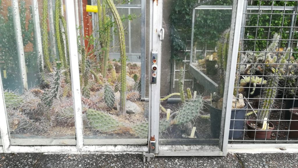 Les succulentes du jardin botanique de Nantes  Img_2693