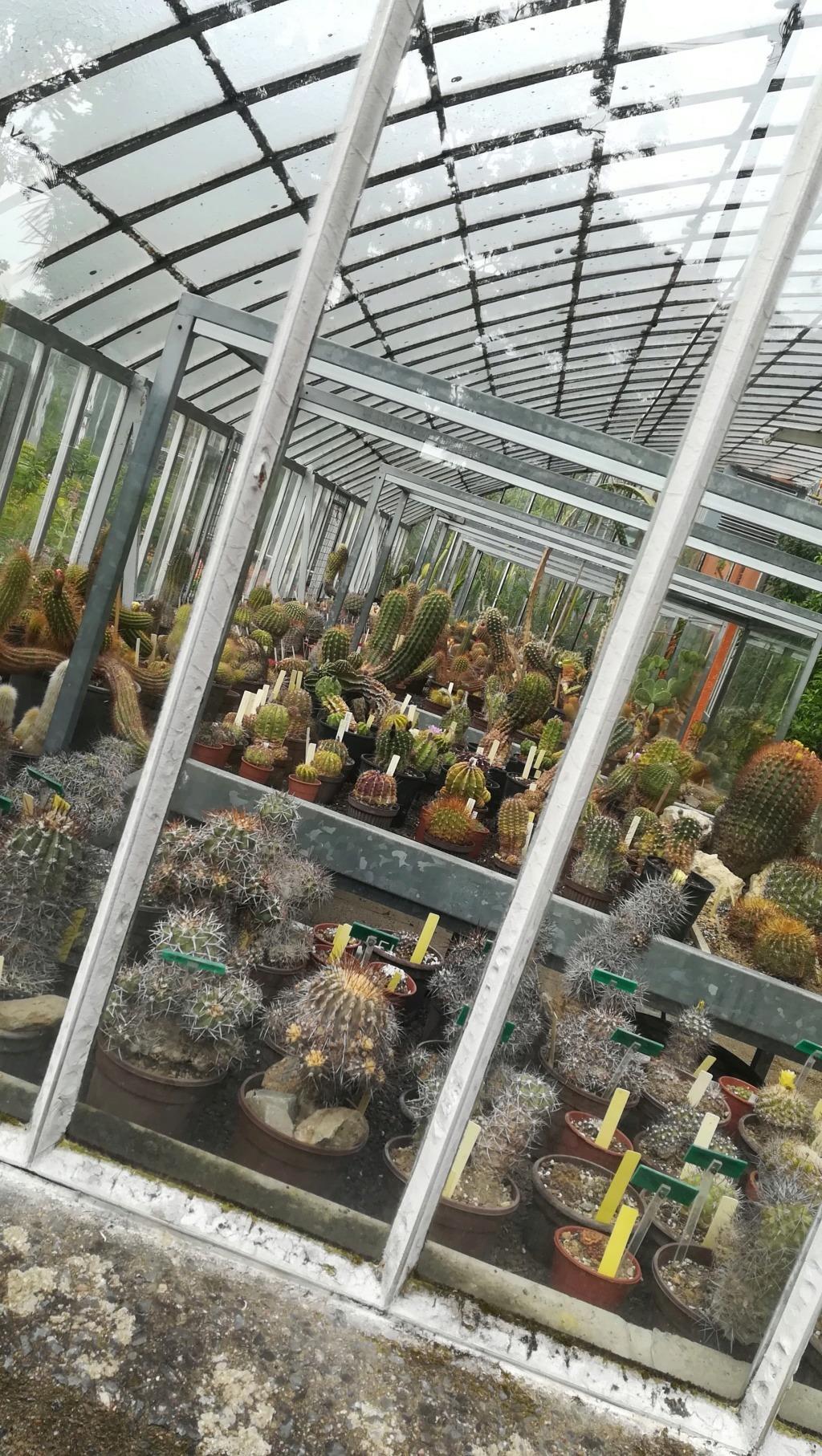Les succulentes du jardin botanique de Nantes  Img_2694